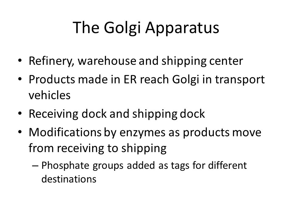 The Golgi Apparatus Refinery, warehouse and shipping center