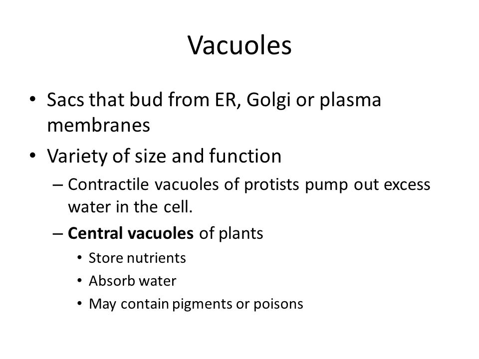 Vacuoles Sacs that bud from ER, Golgi or plasma membranes