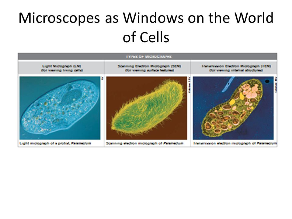 Microscopes as Windows on the World of Cells