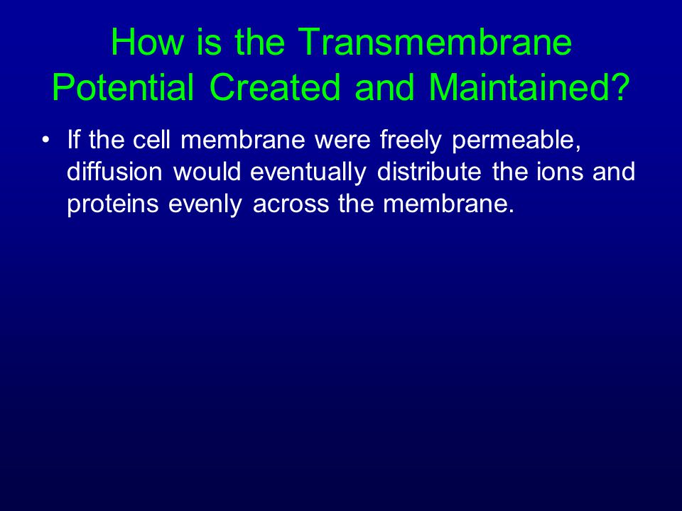 How is the Transmembrane Potential Created and Maintained