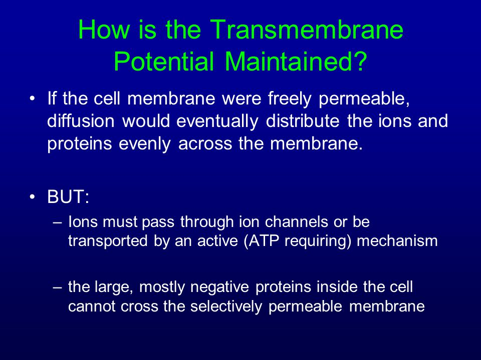 How is the Transmembrane Potential Maintained