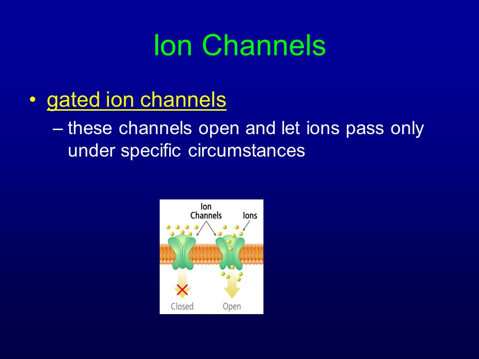 Ion Channels gated ion channels