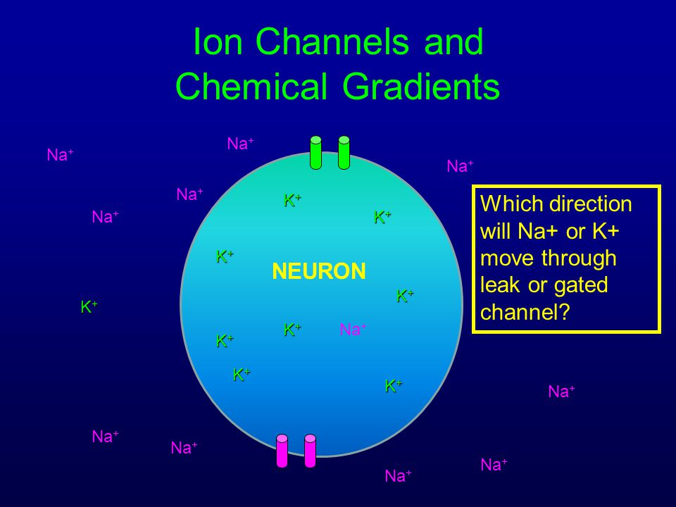 Ion Channels and Chemical Gradients