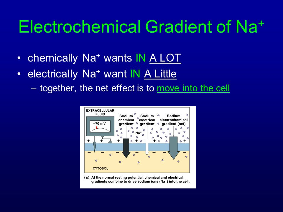 Electrochemical Gradient of Na+