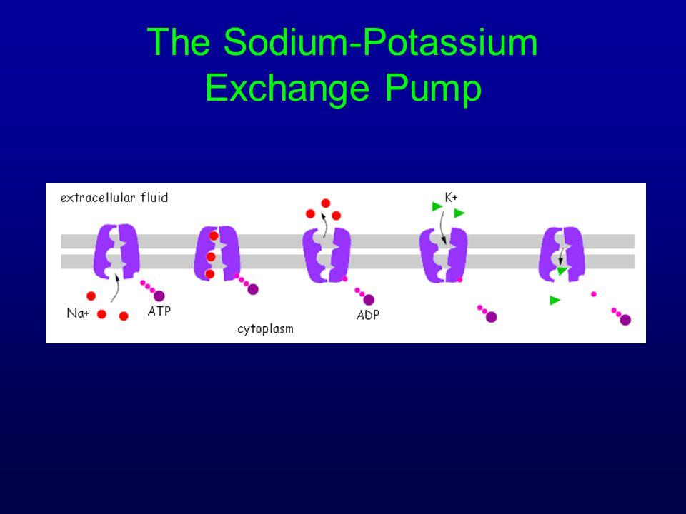 The Sodium-Potassium Exchange Pump