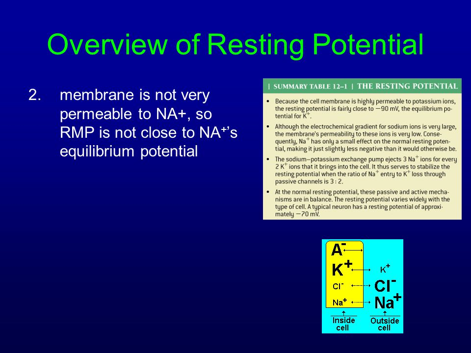 Overview of Resting Potential