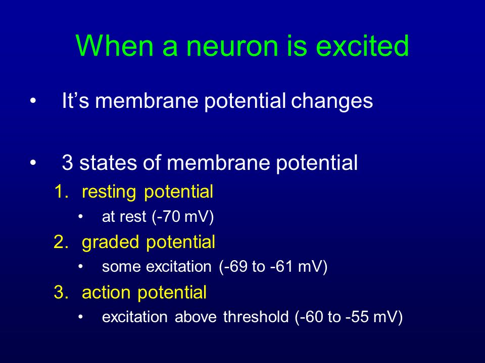 When a neuron is excited