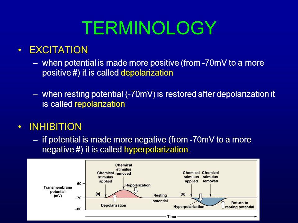 TERMINOLOGY EXCITATION INHIBITION