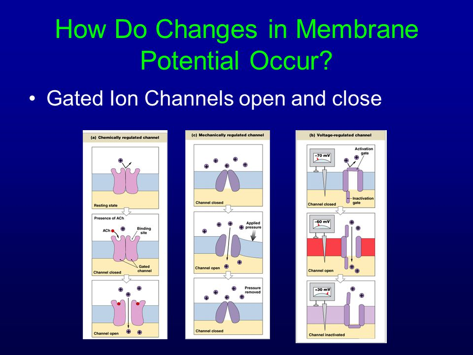 How Do Changes in Membrane Potential Occur