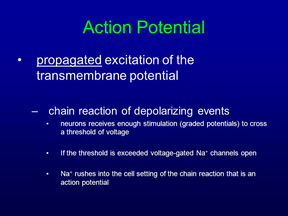Action Potential propagated excitation of the transmembrane potential