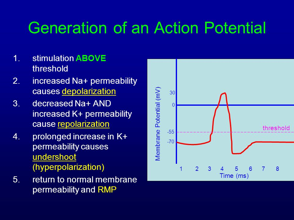 Generation of an Action Potential