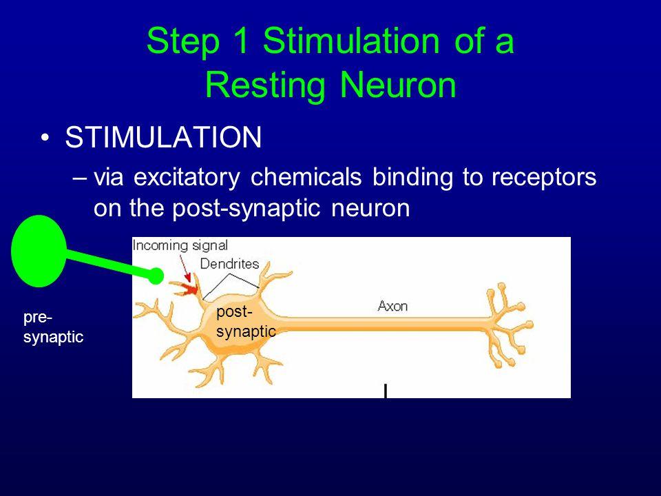 Step 1 Stimulation of a Resting Neuron