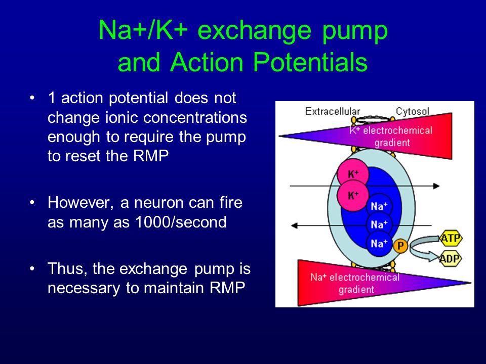 Na+/K+ exchange pump and Action Potentials