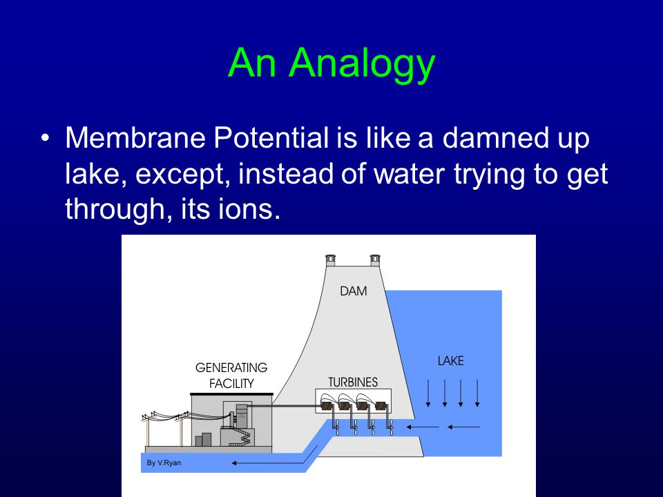 An Analogy Membrane Potential is like a damned up lake, except, instead of water trying to get through, its ions.
