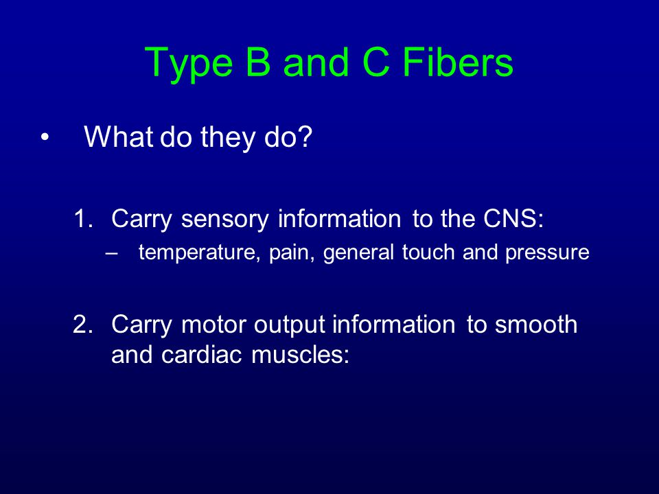 Type B and C Fibers What do they do