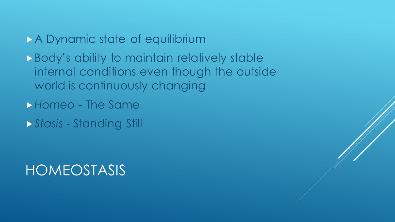 Homeostasis A Dynamic state of equilibrium