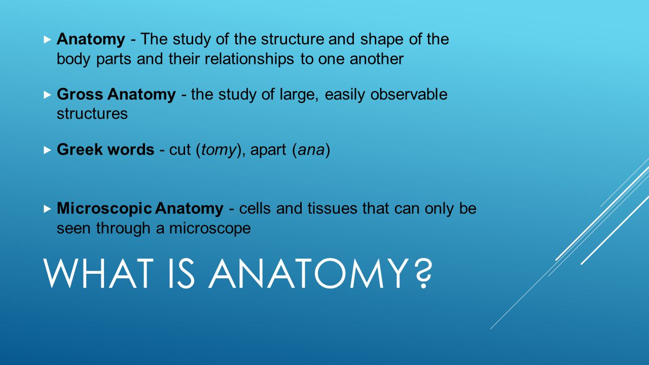 Anatomy - The study of the structure and shape of the body parts and their relationships to one another