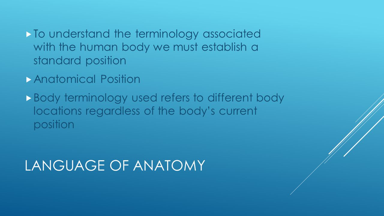To understand the terminology associated with the human body we must establish a standard position