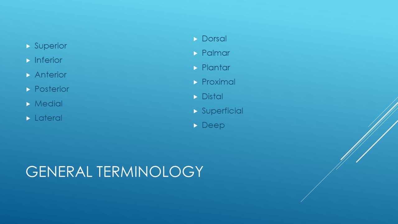 General Terminology Dorsal Superior Palmar Inferior Plantar Anterior