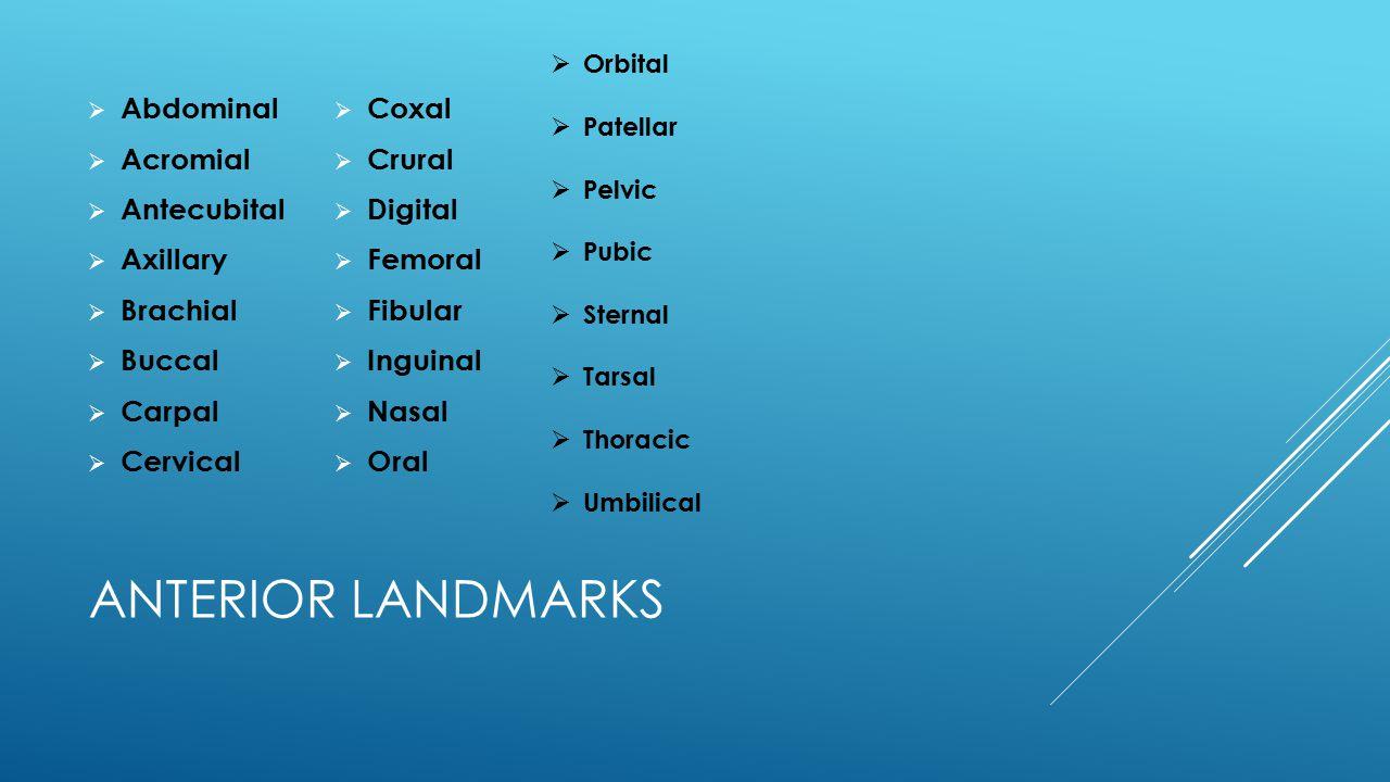 Anterior Landmarks Abdominal Acromial Antecubital Axillary Brachial