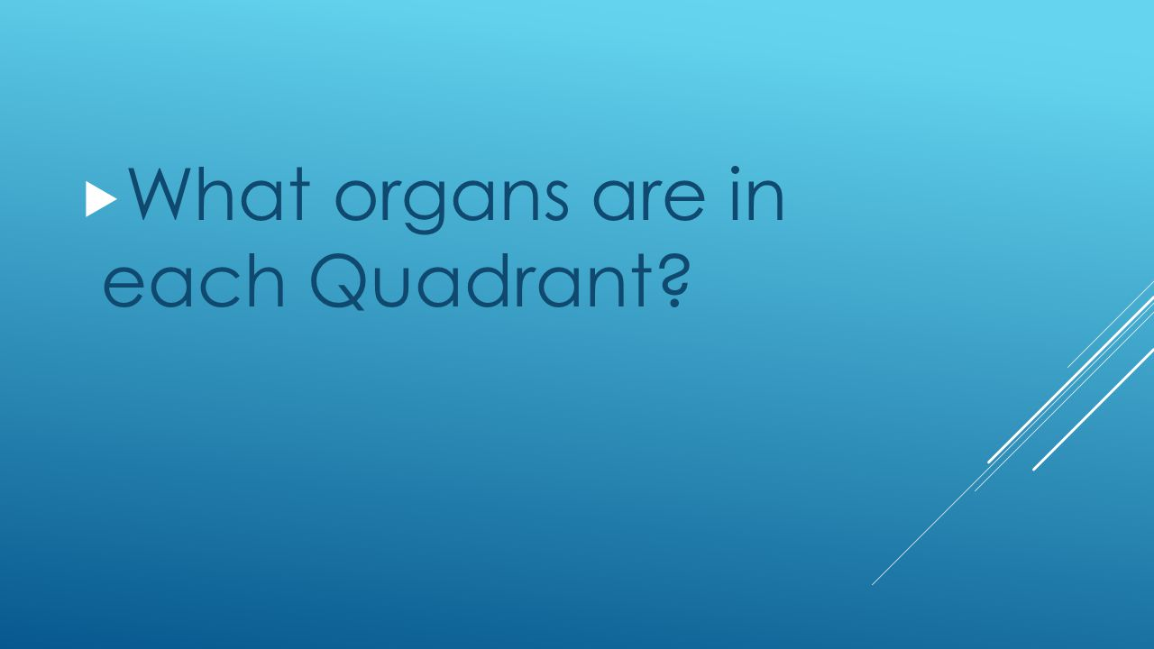 What organs are in each Quadrant