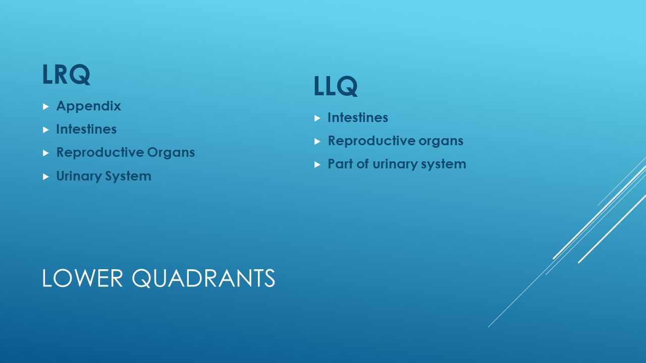 LRQ LLQ Lower Quadrants Appendix Intestines Intestines