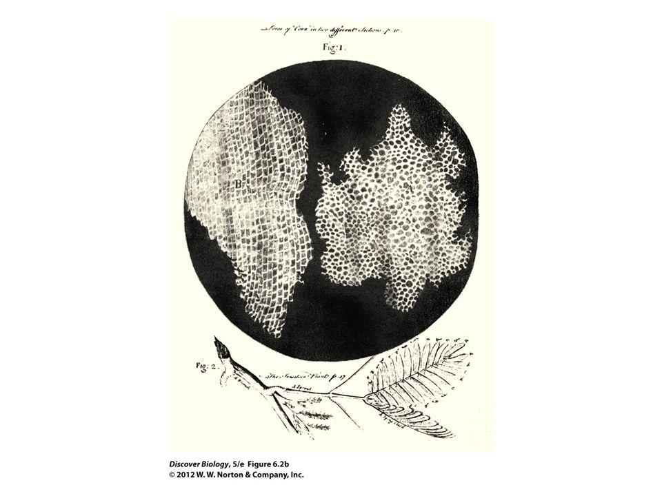 Figure 6.2b Light Microscope Used by Robert Hooke (1635–1703)