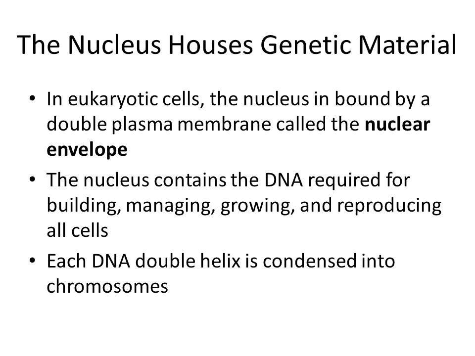 The Nucleus Houses Genetic Material