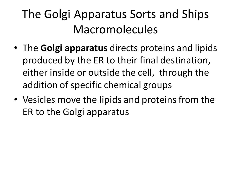 The Golgi Apparatus Sorts and Ships Macromolecules