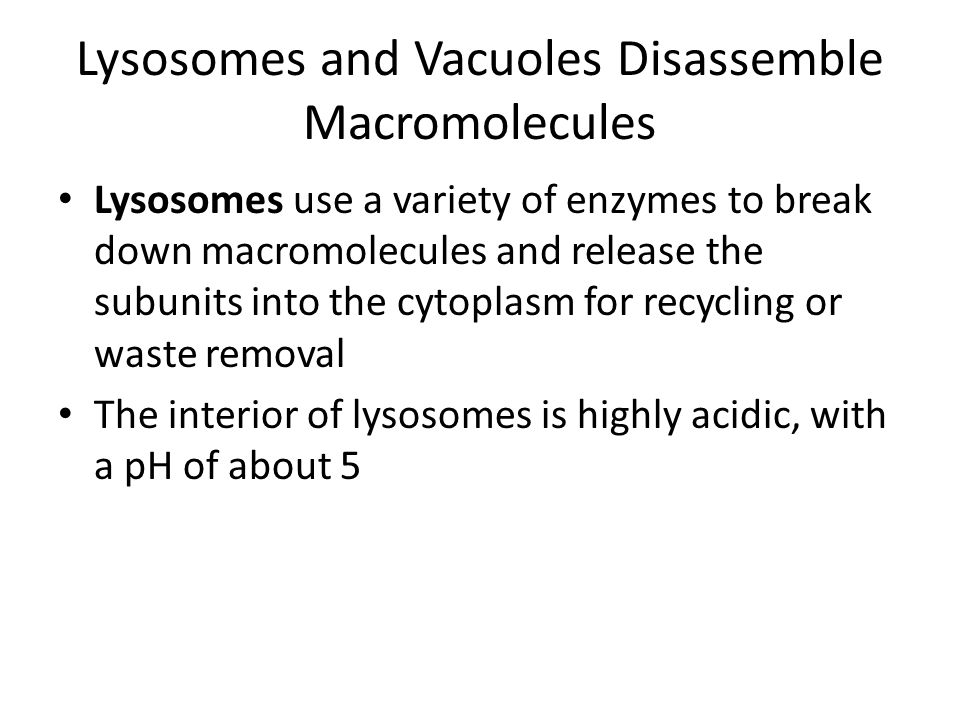 Lysosomes and Vacuoles Disassemble Macromolecules
