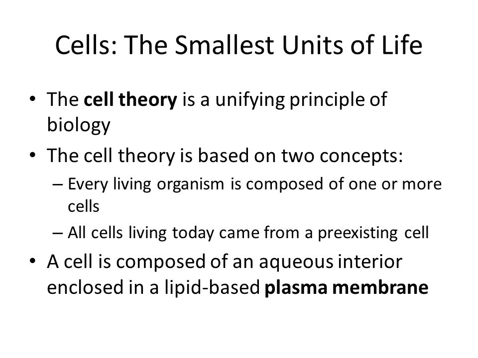 Cells: The Smallest Units of Life