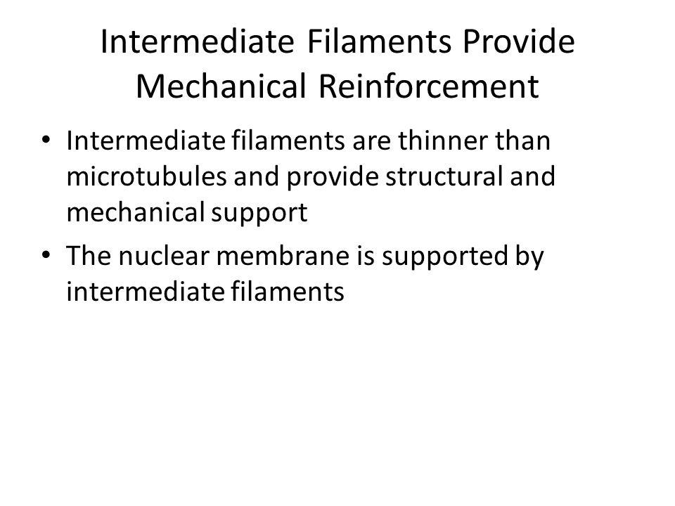 Intermediate Filaments Provide Mechanical Reinforcement