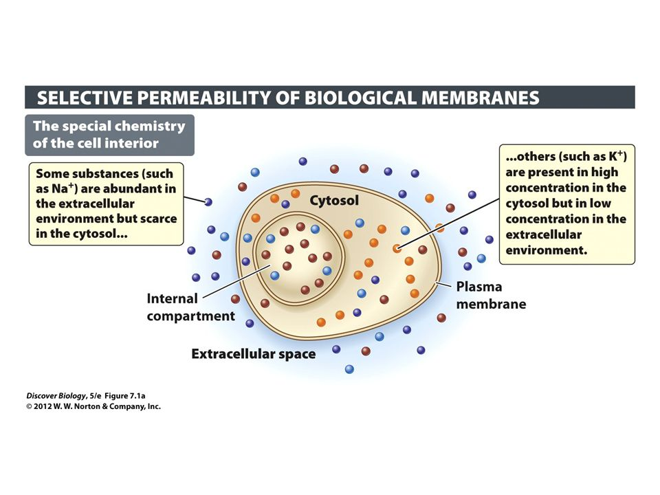 Figure 7.1 The Plasma Membrane Is a Barrier and a Gatekeeper
