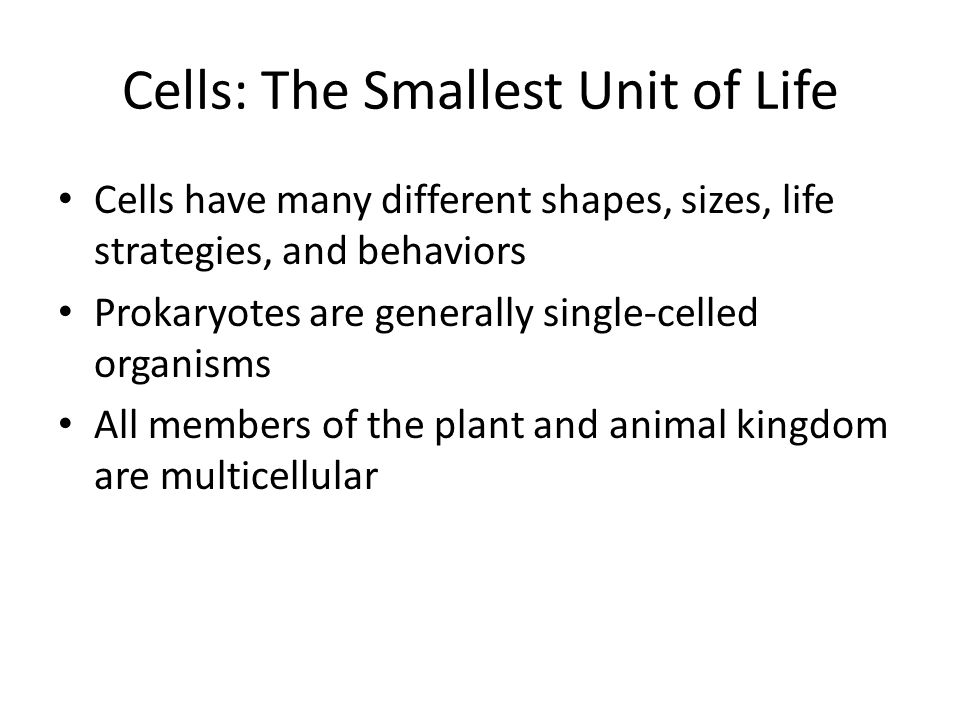 Cells: The Smallest Unit of Life