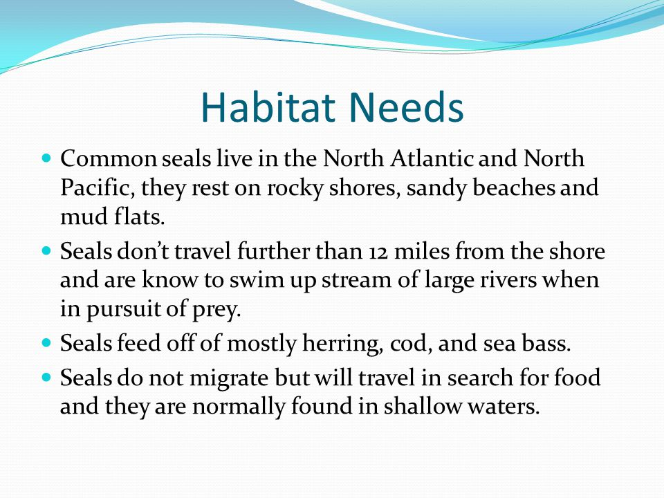 Habitat Needs Common seals live in the North Atlantic and North Pacific, they rest on rocky shores, sandy beaches and mud flats.