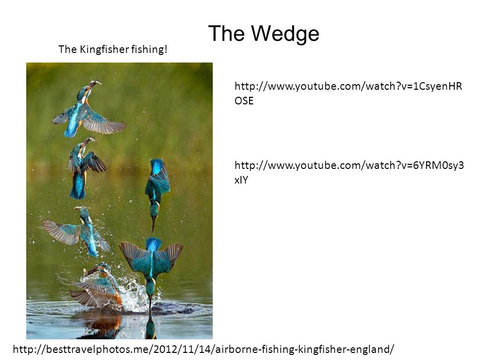 The Wedge The Kingfisher fishing!