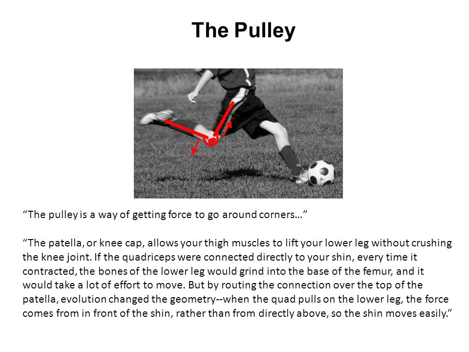 The Pulley The pulley is a way of getting force to go around corners…
