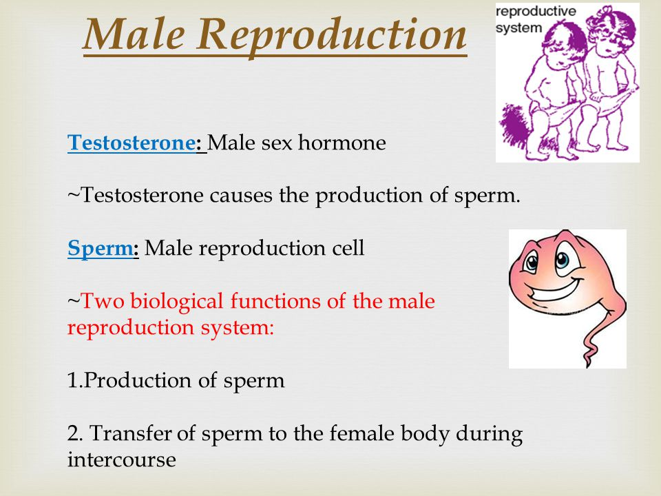 Male Reproduction Testosterone: Male sex hormone