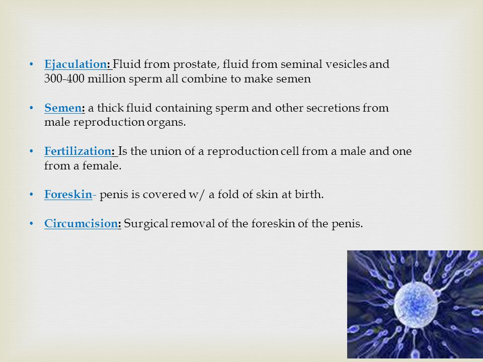 Ejaculation: Fluid from prostate, fluid from seminal vesicles and 300-400 million sperm all combine to make semen