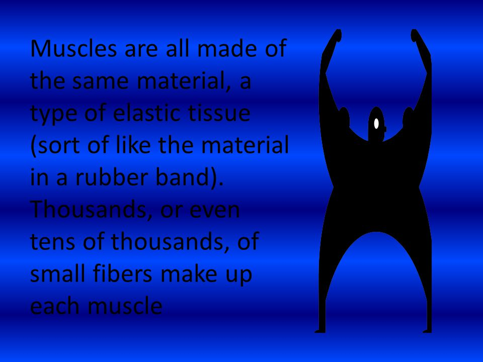 Muscles are all made of the same material, a type of elastic tissue (sort of like the material in a rubber band).
