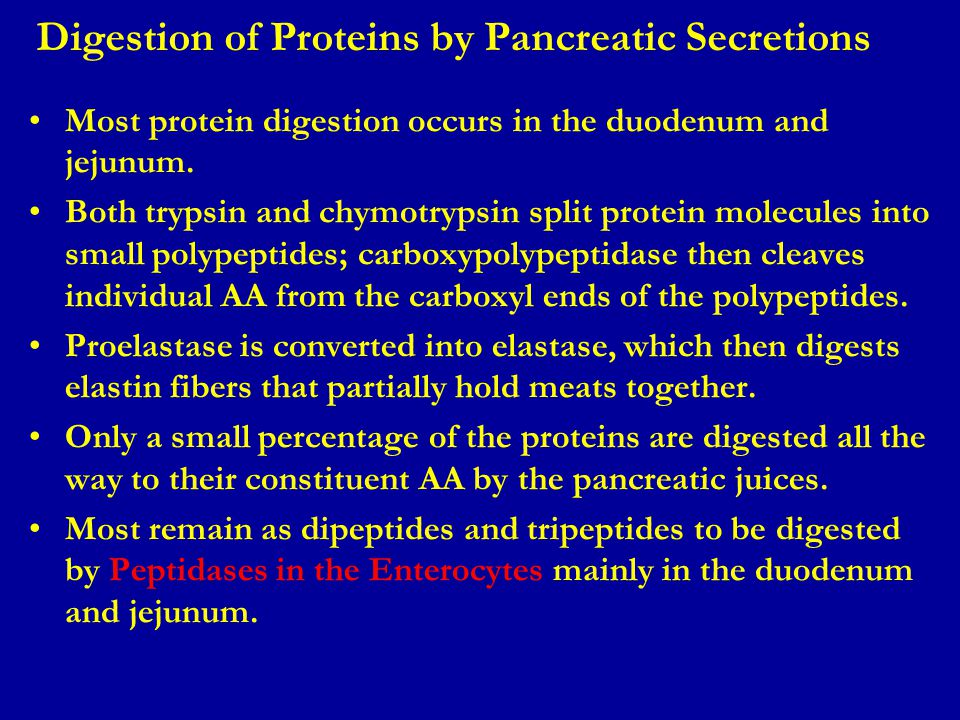 Digestion of Proteins by Pancreatic Secretions