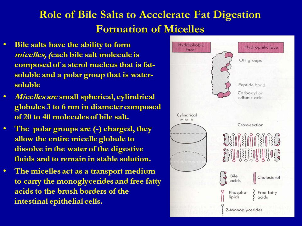 Role of Bile Salts to Accelerate Fat Digestion Formation of Micelles