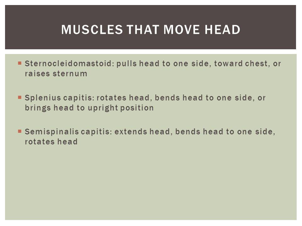 Muscles that move head Sternocleidomastoid: pulls head to one side, toward chest, or raises sternum.