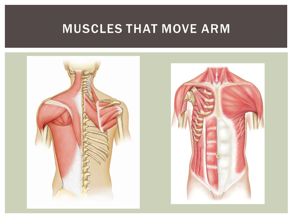 Muscles that move arm