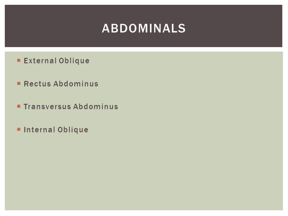 Abdominals External Oblique Rectus Abdominus Transversus Abdominus