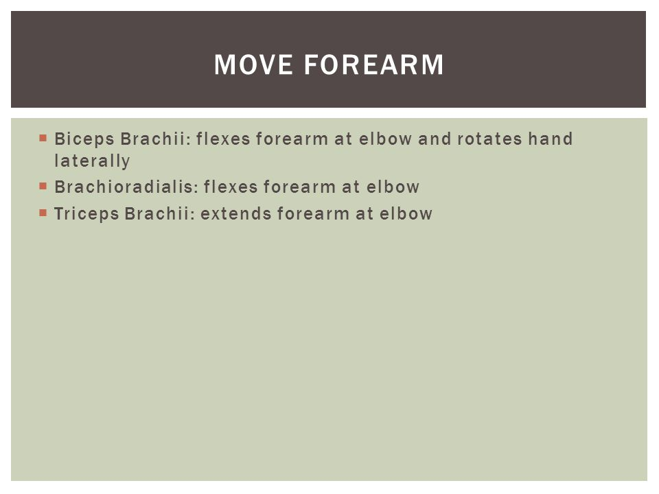 Move forearm Biceps Brachii: flexes forearm at elbow and rotates hand laterally. Brachioradialis: flexes forearm at elbow.