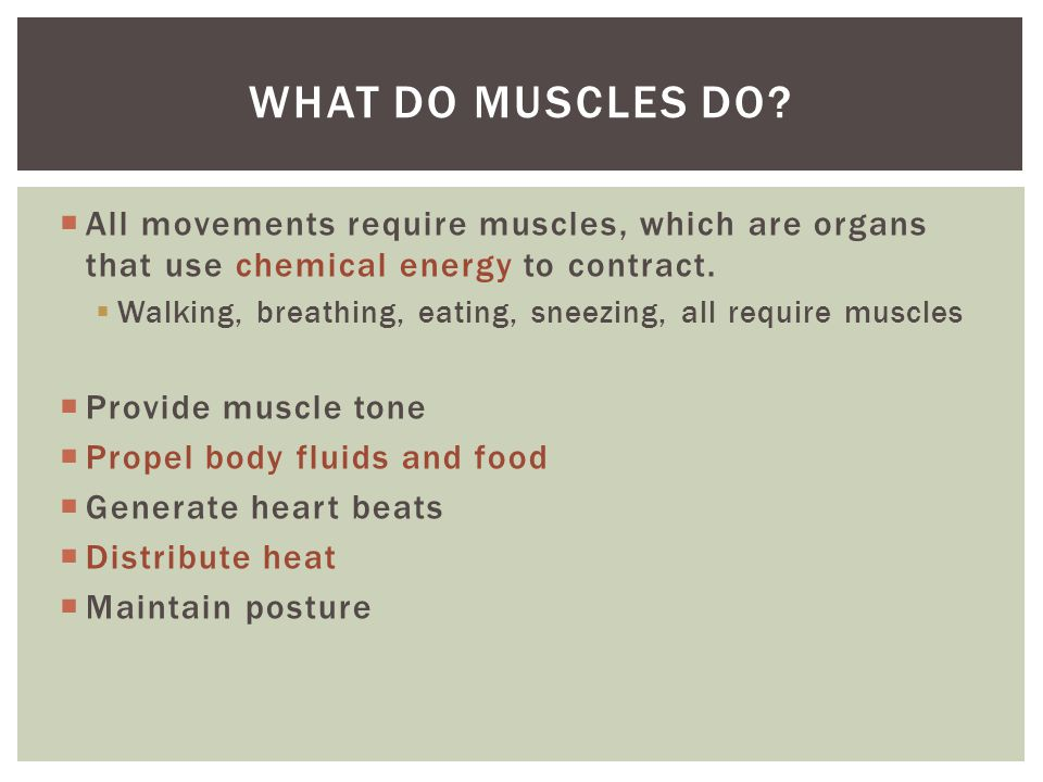 What do muscles do All movements require muscles, which are organs that use chemical energy to contract.