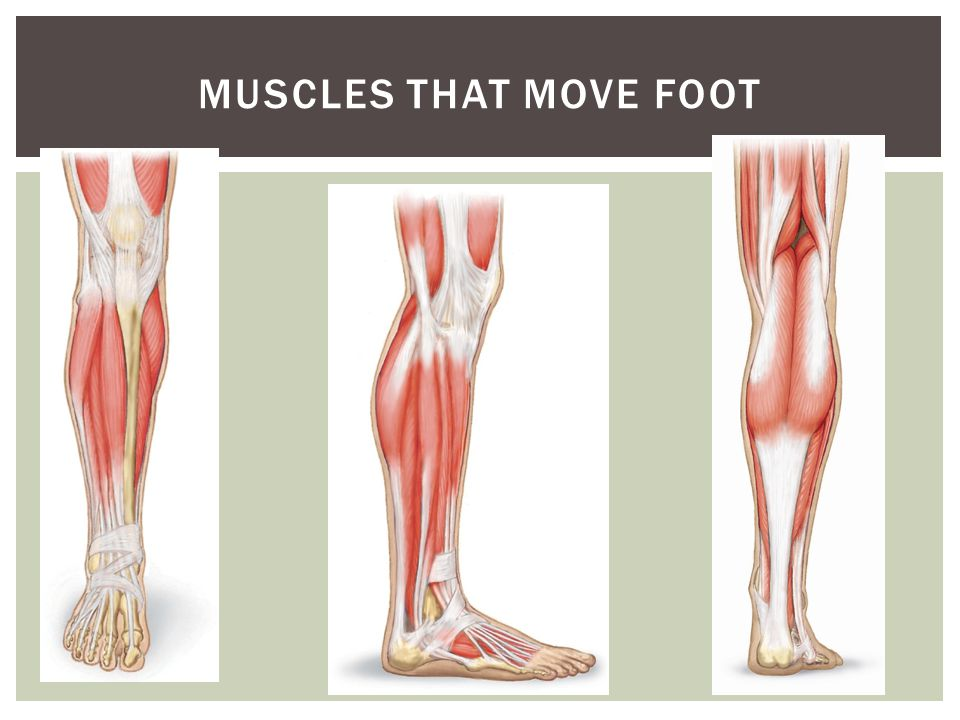 Muscles that move foot