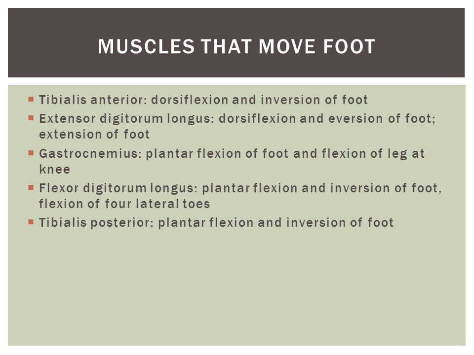 Muscles that move foot Tibialis anterior: dorsiflexion and inversion of foot.