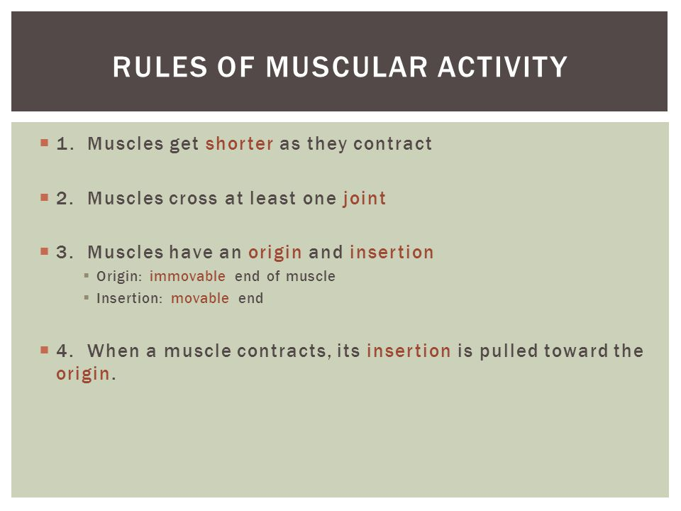 Rules of muscular activity